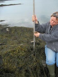 Seaweed as a Fishery_ Seaweed Stories Photo 1